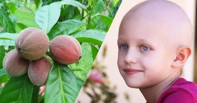 癌症患者有救啦!澳洲神奇浆果抗癌藥开始人体试验,几天内肿瘤消失!世界瞩目!-澳洲唐人街