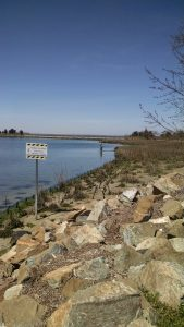 Delaware Living Shorelines Committee's Indian River Marina Living Shoreline Project