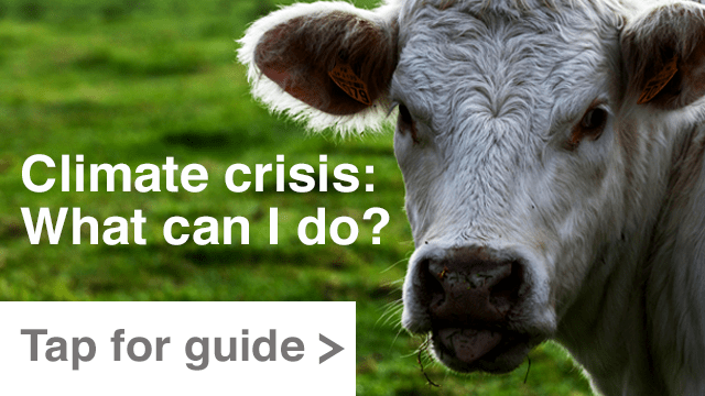 Guide: Climate crisis - how can I help?