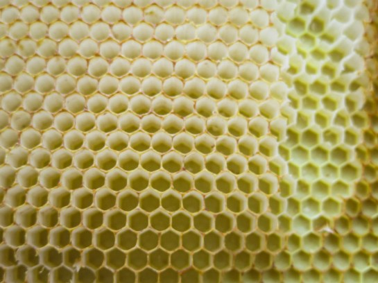 FIT Bee hive
