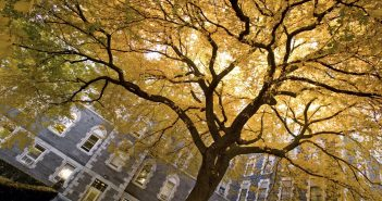 A tree with golden yellow leaves in front a building