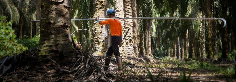 Oil Palm factory worker in Santarem, Para state, Brazil