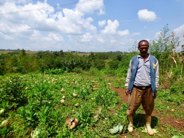 What is biochar? - Landscape News