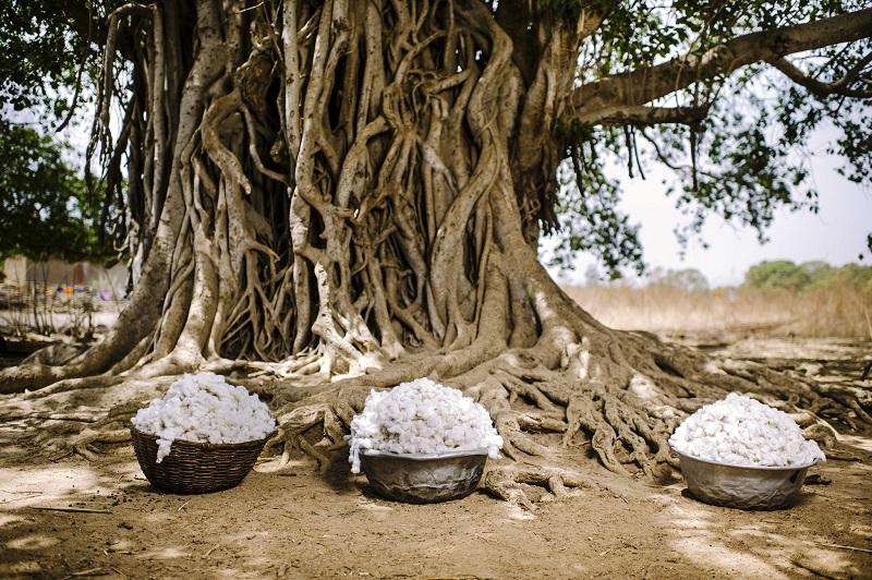 Cotton, Burkina Faso