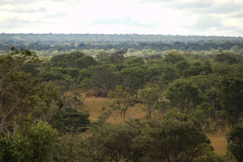 Miombo woodlands, Zambia