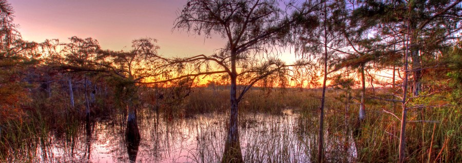 Cyprus trees at sunset in the Everglades. G.Gardner, NPSphoto