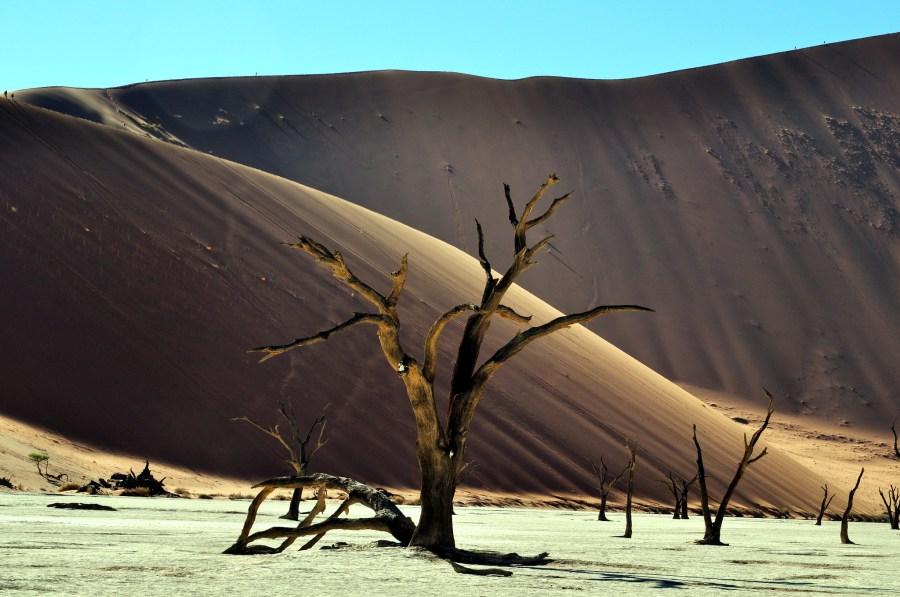 Petrified wood in the Namibian desert. ER Bauer, Flickr