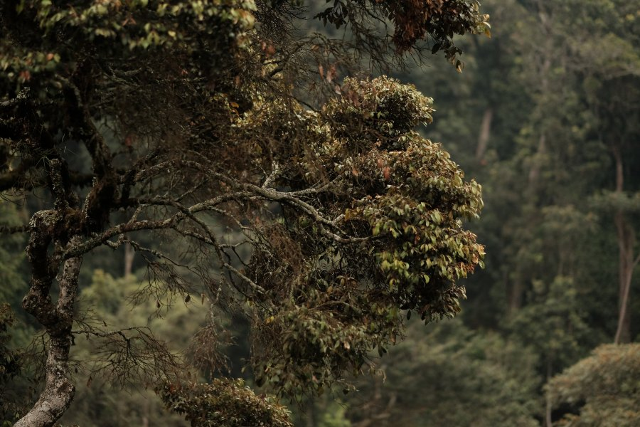 The Nyungwe forest in Rwanda is perhaps best known for being home to 13 species of primates. Brian Harries, Flickr