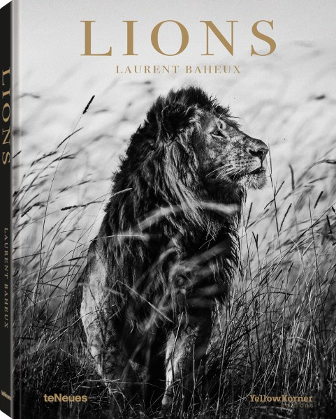 © Lions by Laurent Baheux, published by teNeues, € 40, www.teneues.com