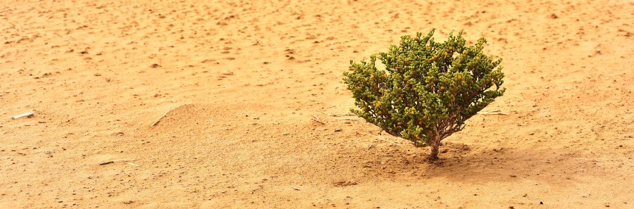 A lone tree stands in the Sahara, whose encroachment on the Sahel has led to the desertification of lands and inspired the Great Green Wall. orientalizing, Flickr