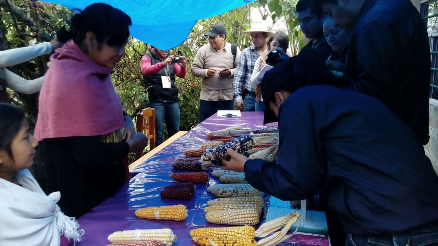 Farmers exchange their Indigenous maize varieties at a seed fair. Kevin Ferrara, DAI