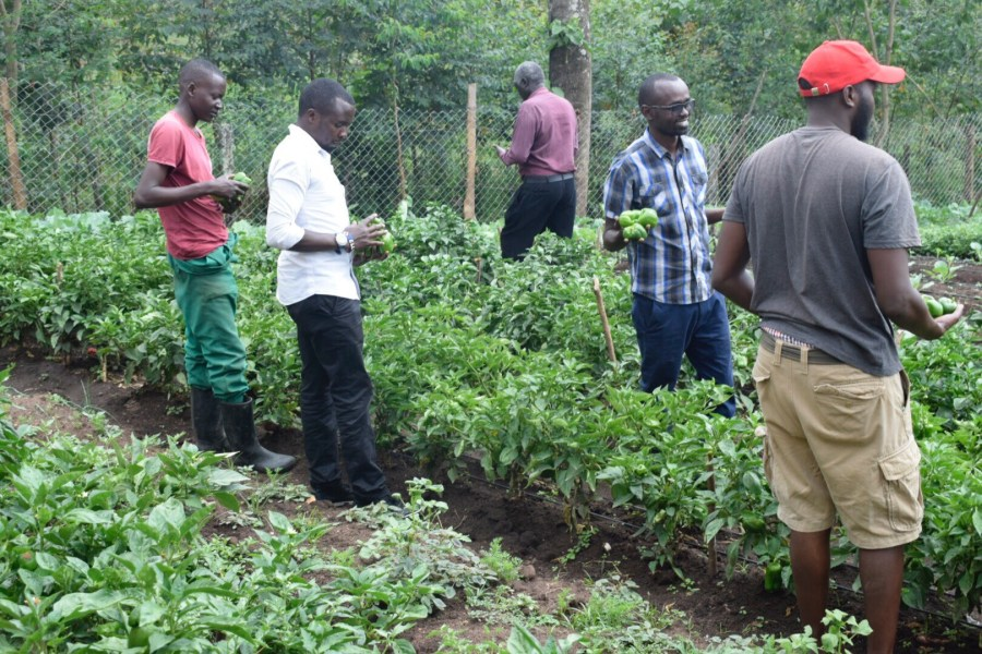 Kirwa educates Kenyan farmers about how to plant without the use of pesticides. Courtesy of Rodgers Kirwa