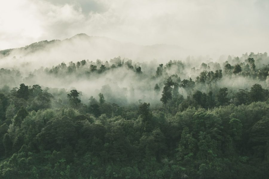Le Bonn Challenge vise à restaurer les forêts dégradées et déboisées.  Tobias Tullius, Unsplash
