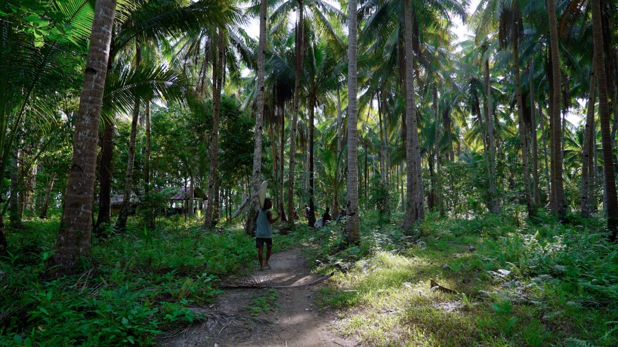 Siargao is widely regarded for having the best surf breaks in the Philippines. Locals trek through the forests to reach them. Justin K. Davey