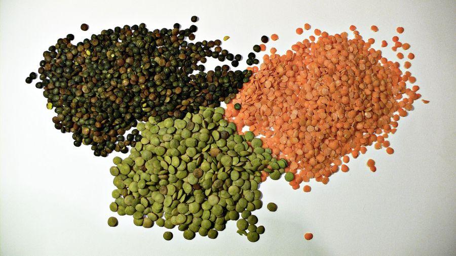 Three kinds of lentils. Justinc, Wikimedia Commons