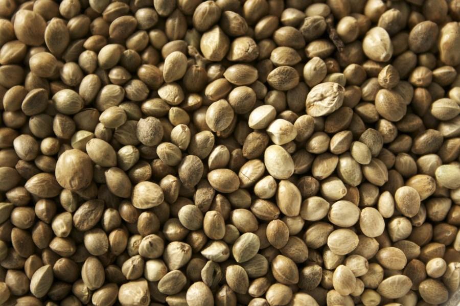 Hemp seeds. Unconventional Emma, Flickr