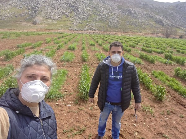 ICARDA Lebanon Genebank Manager Mariana Yazbek says while maintaining lockdown protocol, staff work in a rotation to conduct essential tasks to manage field trials, traveling directly from their homes to the field, and back home.