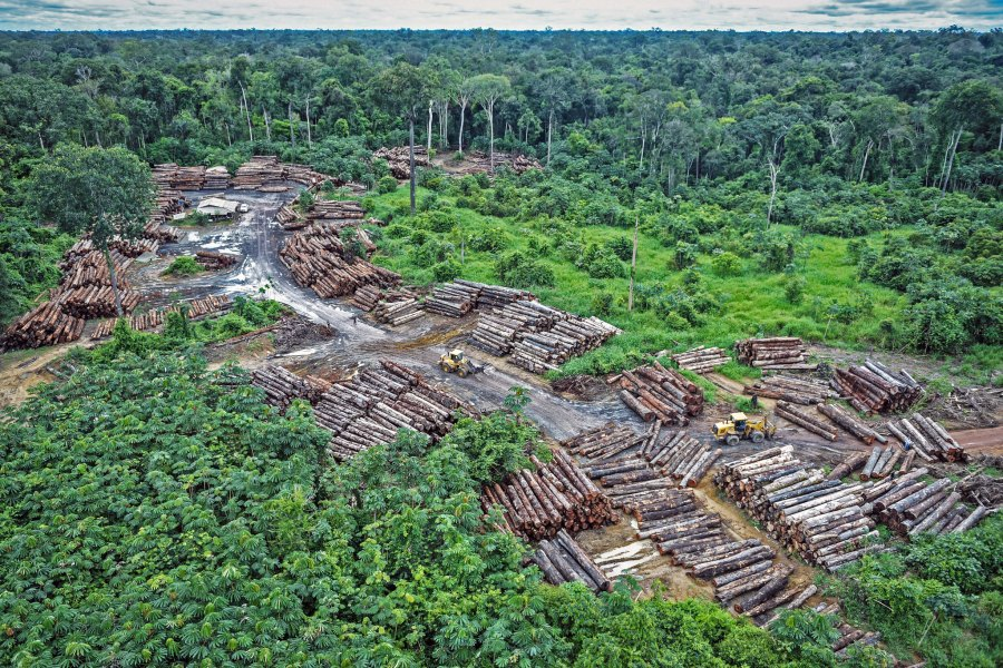 Illegal logging on the lands of the Indigenous Pirititi people in the Brazilian Amazon, where burning season is expected to peak July. Quapan, Flickr
