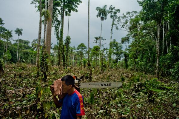 Un aldeano Kichwa camina por la selva con su motosierra frente a un área que recientemente despejó para la agricultura cerca del río Napo en Ecuador. Tomas Munita, CIFOR