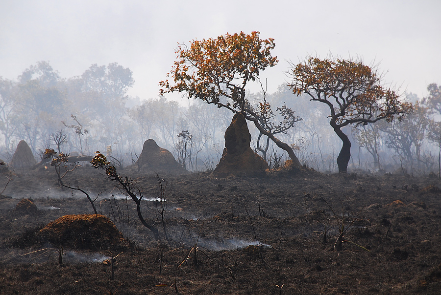 Controlled burning is common practice in the Cerrado, but climate change has made fires more difficult to control. In 2019, fires in the Cerrado increased by 800 percent. Raizdedois, Flickr