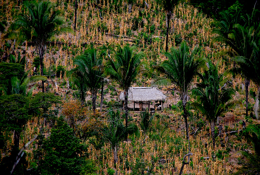 A small farm in the Cerrado. Raizdedois, Flickr