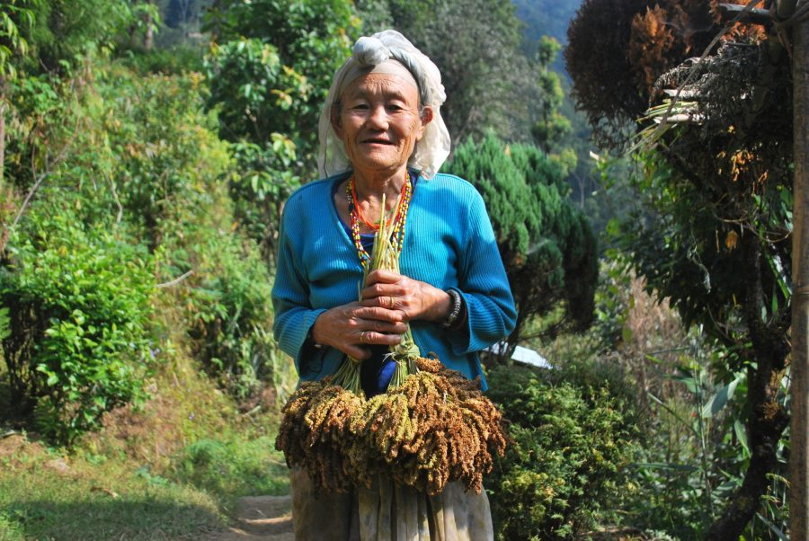 "In villages throughout India, Indigenous communities have relied on the diversity of their native crops in times of difficulty. Here, a woman farmer of the Lepcha community holds the local millet landrace named ""Murkey."" Nawraj Gurung"