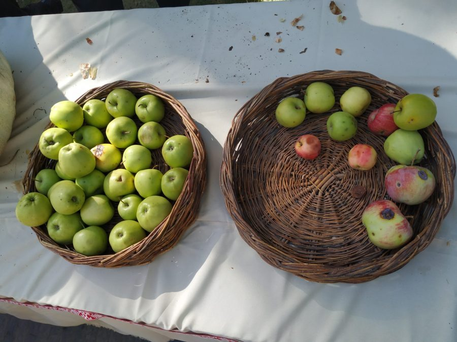 Asia central es el centro de origen de la manzana, una de las frutas favoritas en el mundo con más de 7500 variedades. Actualmente, el Parque de la Manzana protege y celebra las decenas de variedades autóctonas de manzanas, peras y albaricoques de Tayikistán. Alimek Otambekov, INMIP