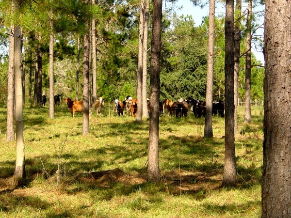 Van Horlick's hydraulic excavators can help plant a diverse array of species in a single landscape that includes livestock, known as silvopasture. National Agroforestry Center