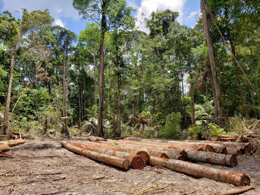Round wood ready for transportation in a Surinamese community forest. Giani Razab Sekh, Tropenbos