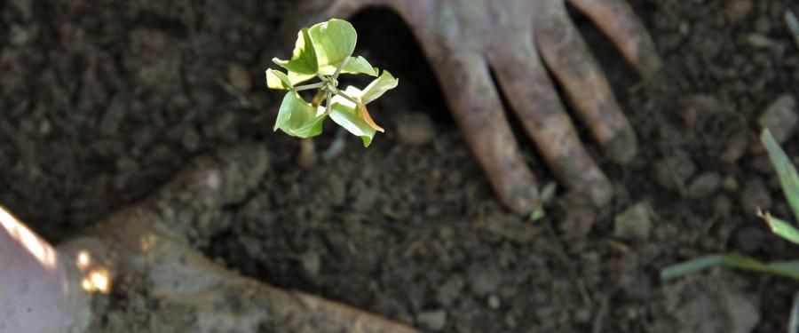Planting on a farm in São Paolo, Brazil, where Sakiyama spent her youth. Adriano Gambarini, WWF-US