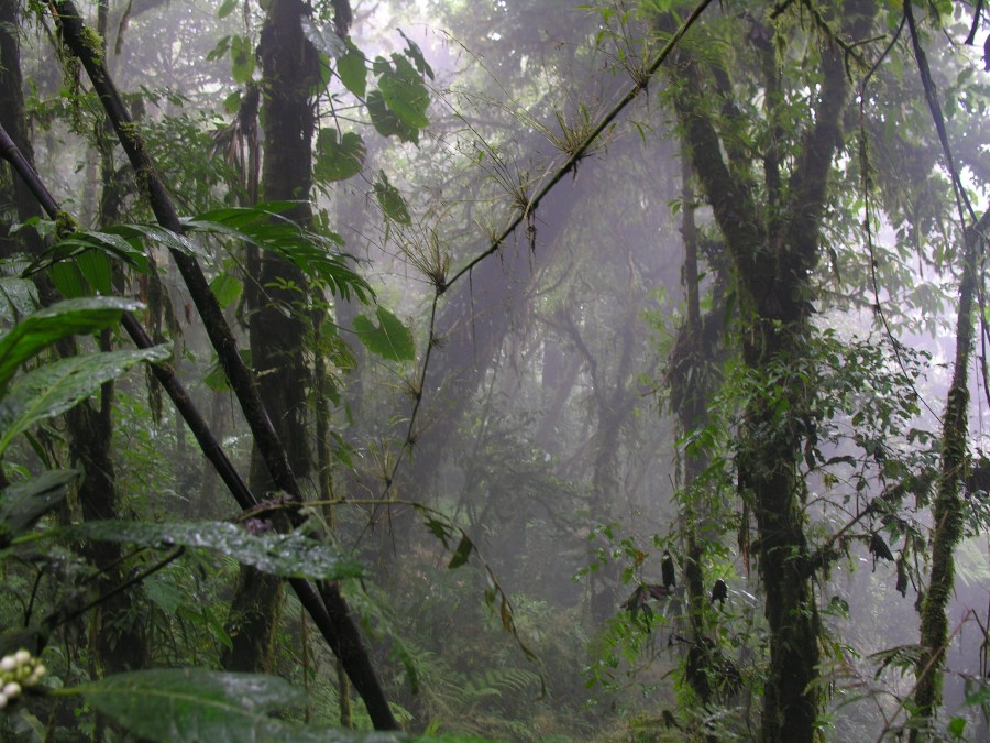 El Bosque Nuboso Monteverde en Costa Rica. Jodi Crisp, Flickr