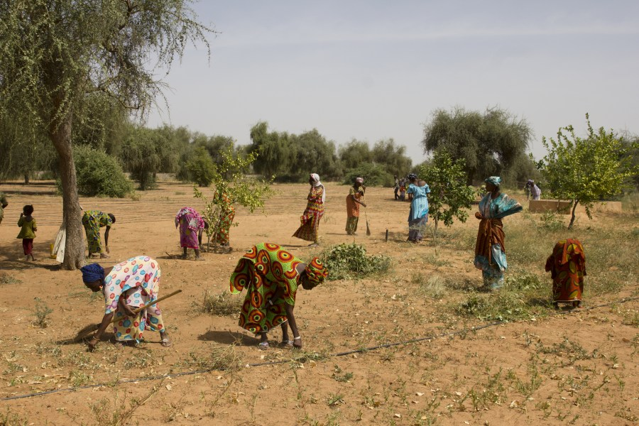 Women planting trees in Africa's Great Green Wall initiative. Courtesy of UNCCD