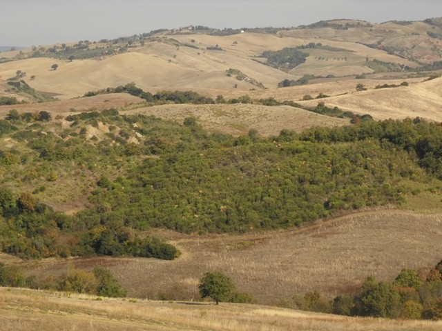 Naturally regenerating forest growing on an abandoned pasture in Tuscany, Italy. Etrusko25, Wikimedia Commons