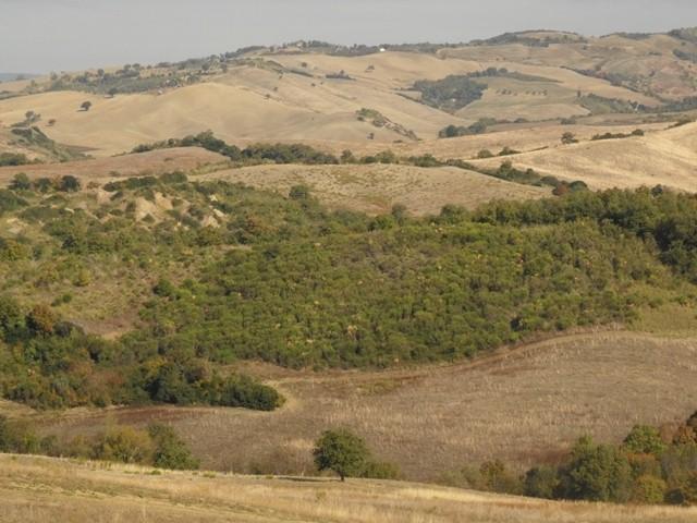 Bosque que está en proceso de regeneración natural crecen en un pastizal abandonado en Toscana, Italia. Etrusko25, Wikimedia Commons