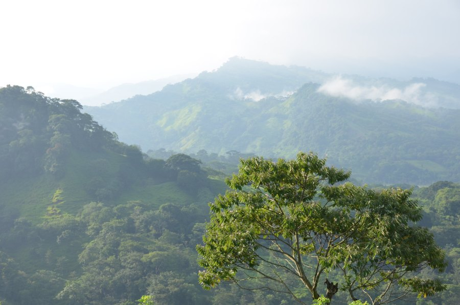 A cloud forest in Chiapas, Mexico. Visual Research, Flickr