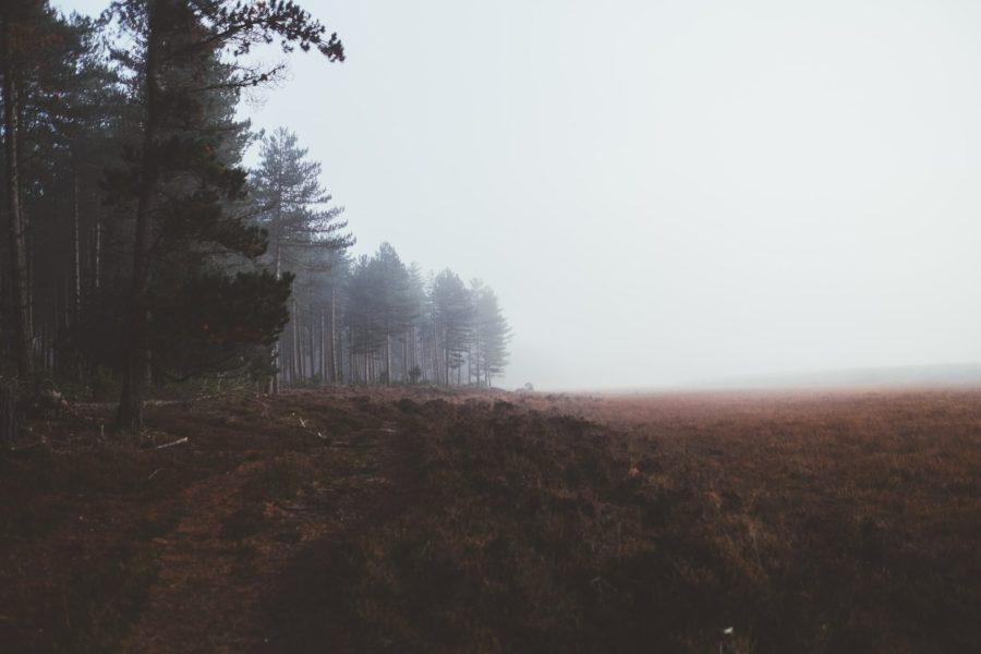 New Forest National Park in the UK. Annie Spratt, Unsplash