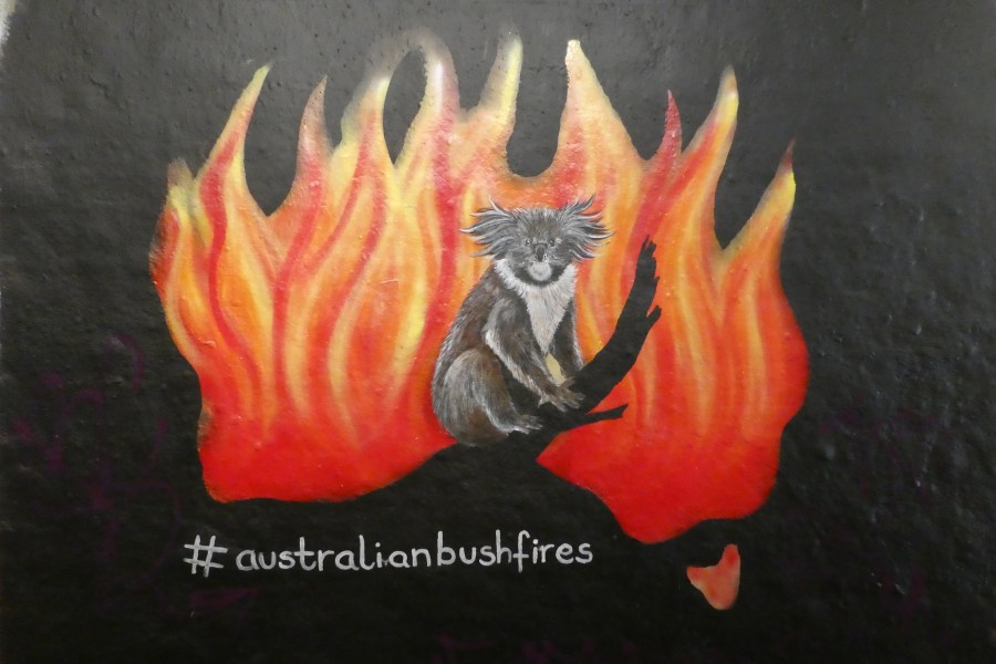 A mural in London by mural artist Michelle Meola commemorating Australia's last bushfire season, which killed many of the continent's iconic koalas. duncan c, Flickr