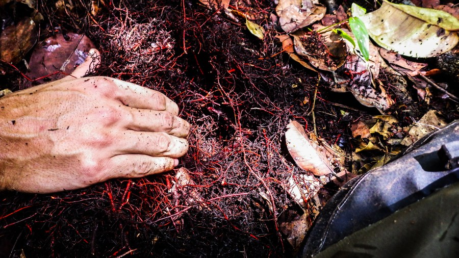 A close-up view of peat. Kristell Hergoualc'h, CIFOR