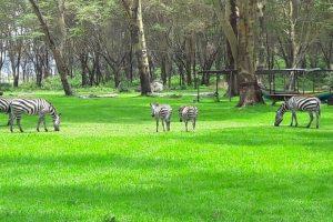 Photo courtesy of UN Environment