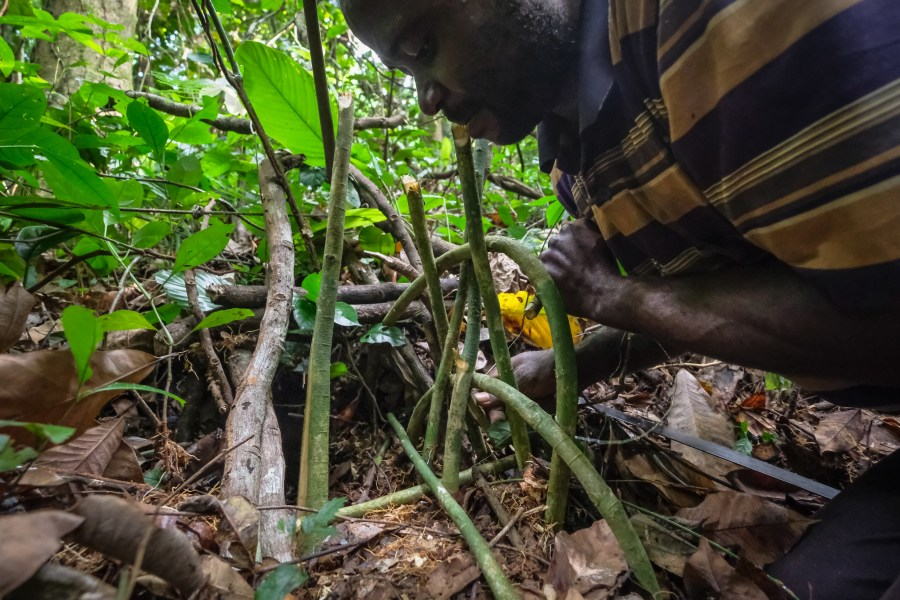 Dudu Lokangia, a 41-year-old hunter, prepares a trap in the forest, Yangambi, DRC. Axel Fassio, CIFOR