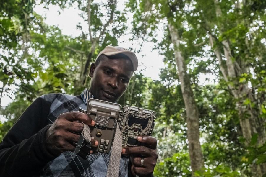 CIFOR researcher Jonas Muhindo sets a camera trap. Axel Fassio, CIFOR