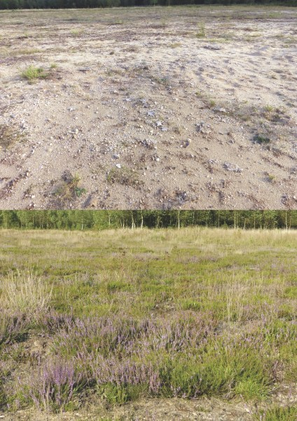 From Wubbs' 2016 study, photographs of two treatment plots, taken eight years after the start of the microbiome experiment. The top control plot was not treated with soil inoculation, while the bottom plot was inoculated with heathland soil. Courtesy of Jasper Wubbs
