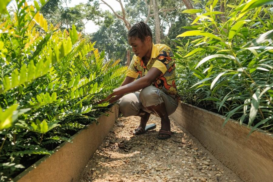 A plant nursery in Yangambi, Democratic Republic of the Congo. Axel Fassio, CIFOR
