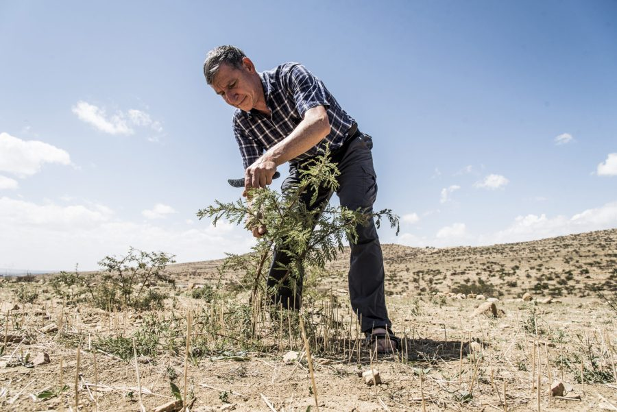Tony Rinaudo demonstrates pruning practices that spur the growth of tree species. Courtesy of World Vision