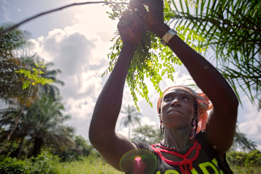 A woman with a Moringa tree in Guinea, where a grant has helped women form cooperatives to plant and harvest from the trees. Joe Saade, UN Women