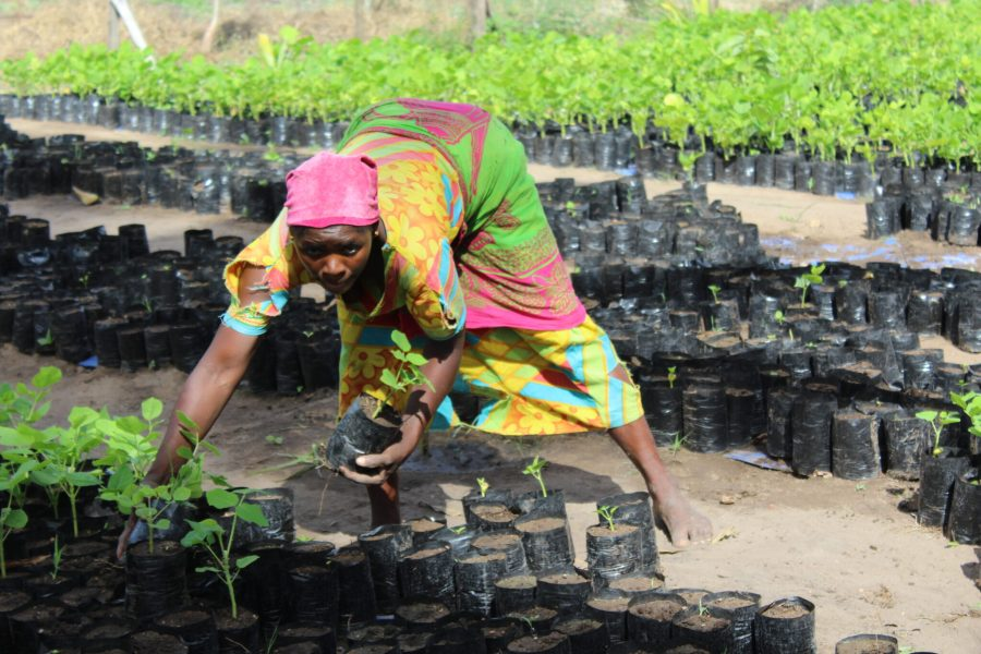 A local community member helping with forest restoration. WWF Tanzania