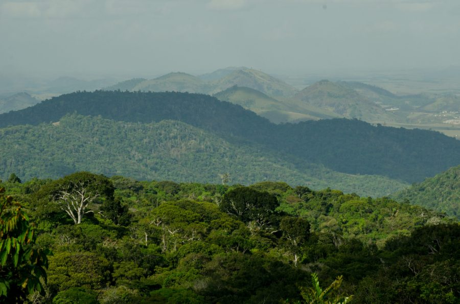 A view over the Urubu-Murici corridor. Courtesy of SAVE Brazil