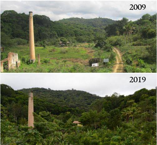 The progress of the reserve's restoration over the course of a decade. Courtesy of SAVE Brazil
