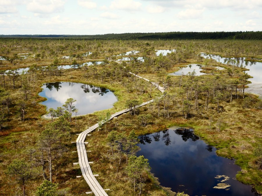 Wetlands, such as the Great Ķemeri Bog in Latvia, support a great variety of species. Runa S. Lindebjerg, GRID-Arendal