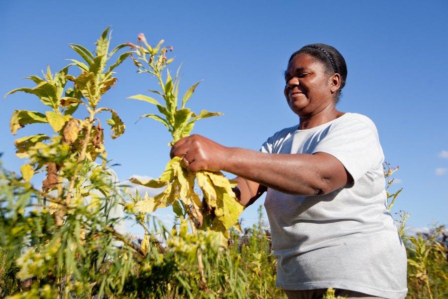 A Quilombola woman farms her land near Canguçu, Brazil. Alina Souza, Palácio Piratini